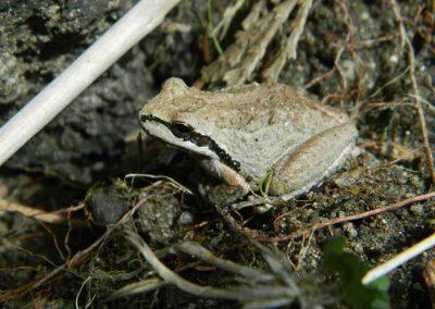 frog- ukuku