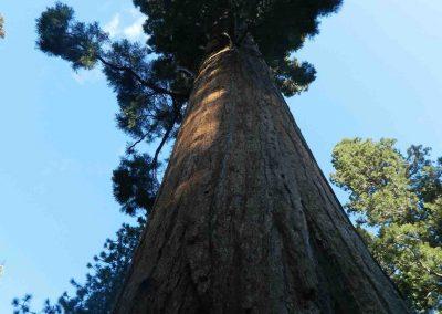 tree-witsetal